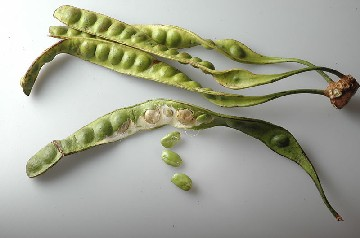Petai is believed to bring more health benefits