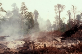 Degraded mixed peat swamp forest burning during the drought of 1998 in Brunei. Pic by Dr Jonathan Davies