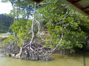To your left - mangrove forest. Brunei's mangrove forest is among the best in the world. You are close to mother nature now.