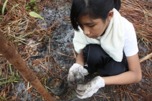 12-year old volunteer, Bazlaa' Billah identifying a stow-away seed.