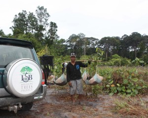 This is what you call re-use. A worker re-uses a canvas to transport 30 tree sapplings at a time to the planting site.